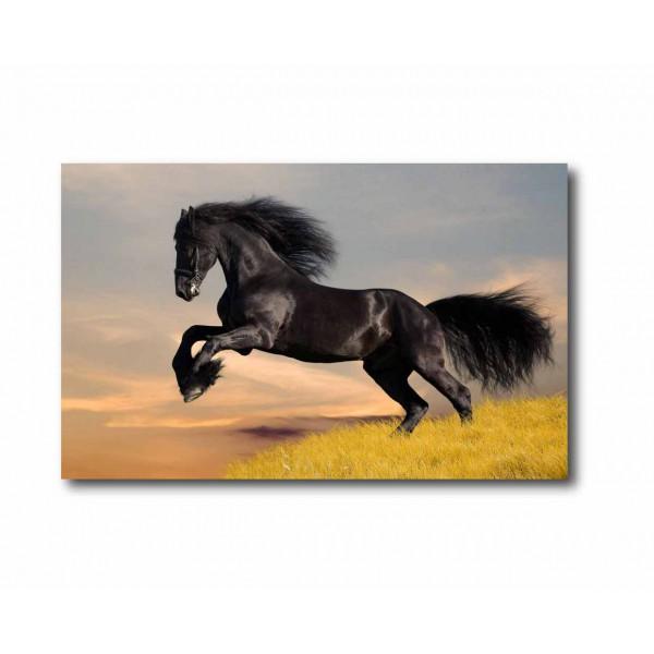 Canvas paard 2